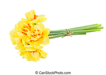 spring narcissus - spring fresh yellow narciss flowers...