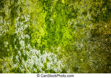 Mildew - detail of a wall covered with mildew
