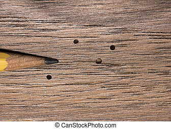 Wood Boring Beetle Damage - Tiny exit holes in wood paneling...