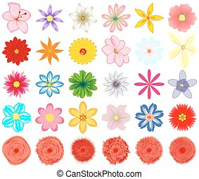 A collection of flowers for the design.
