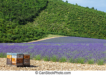 Beehive close to lavander field - Provence, South France....