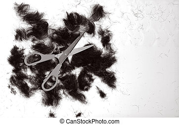 Trimmed hair on the floor with scissors BW copy space...