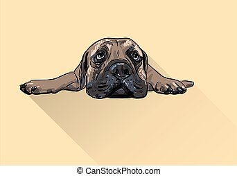 Drawing of lying bullmastiff - Drawing of lying bull mastiff...