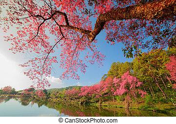 cereja, flor, com, lago,