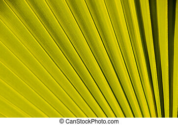 Texture of Green Palm Leaf Pattern Backround