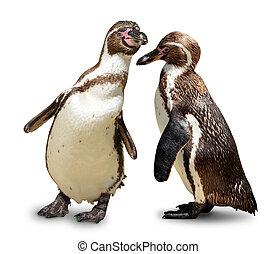 Penguins isolated on white background