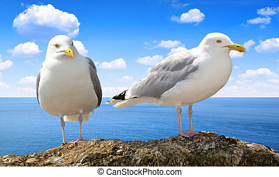 Seagulls - Two Seagulls