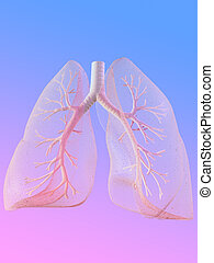 human lung - 3d rendered anatomy illustration of human lung...