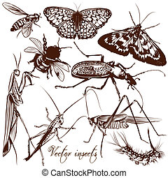 Collection of antique hand drawn insects butterflies and...