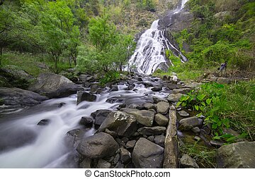 waterfall in forest - waterfall in rainforest