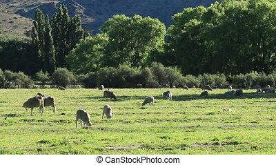 Rural farm landscape - Rural landscape with trees, pasture...
