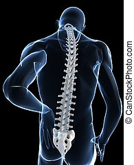 inflamed spine - 3d rendered illustration of a body shape...