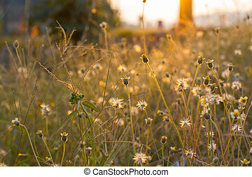 morning sun shining on wildflowers or weeds growing in a...