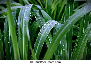Dew drop on leaf grass