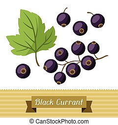 Set of various stylized black currants - Set of various...