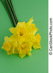 Jonquil flowers - Yellow jonquil flowers on green painted...