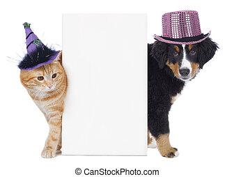 gato, y, perro, con, divertido, sombreros,
