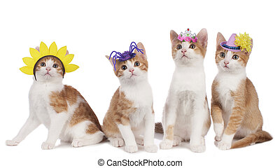 Four funny cats with carnival hats isolated