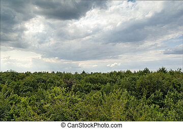 Treetops - High angle view of treetops in a forest under a...