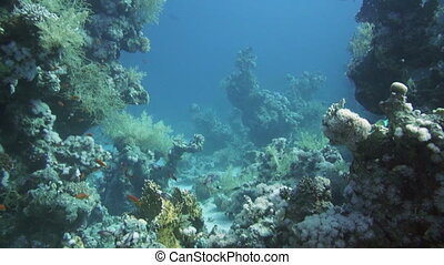 Colorful underwater reef with coral and sponges - Colorful...