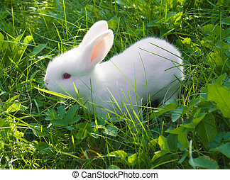 Small white rabbit - Small white bunny (rabbit) sitting in a...