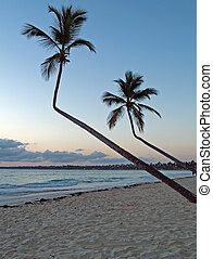 palms in the caribian - palms on the beach in the caribian...