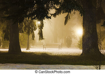 Foggy night in the park - Foggy night in the winter park