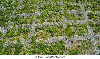 Primosten Vineyards, aerial shot - Aerial view of old...