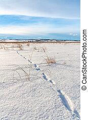 Animal Tracks in Fresh Snow - Landscape of animal tracks in...