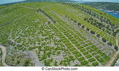 Primosten Vineyards, UNESCO World Heritage site - Aerial...