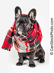 puppy wrapped in a warm scarf