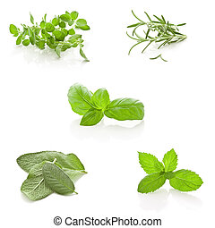 Herbs Collage on white background