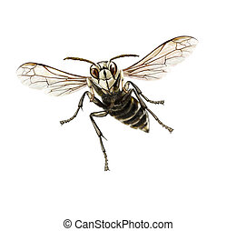 Bald-faced hornet - Digital illustration of a flying...