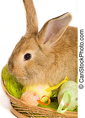 Easter bunny with basket and colored eggs