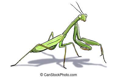 mantis - Digital illustration of a green mantis