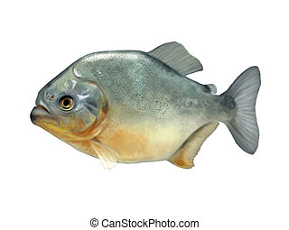 piranha - Digital illustration of a piranha