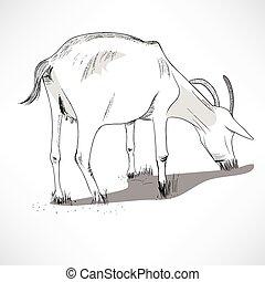 Horned Goat Eating Grass - Black and white lineart...