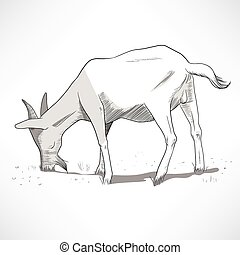 Horned Goat Grazing - Hand drawn black and white lineart...