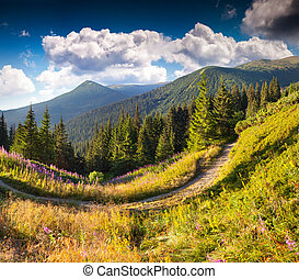 Beautiful summer landscape in the mountain pass