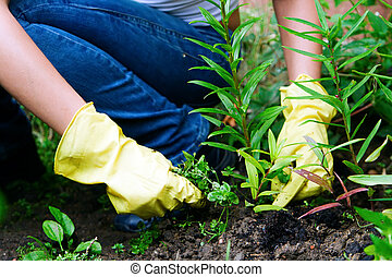 Weeding - a person in gloves working in the garden