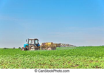 Spraying the field