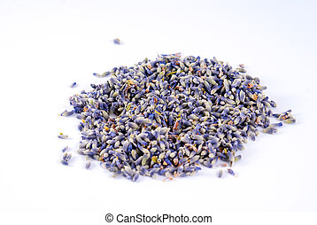 Lavandula angustifolia in white background