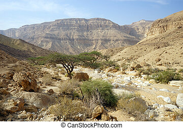 Wadi in Makhtesh Katan crater in Israel...