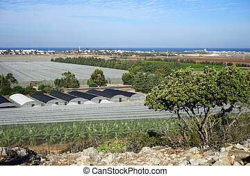 Banana plantation and greenhouses on the coast in Israel...