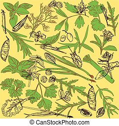 pattern with herbs - bright pattern with spices and herbs