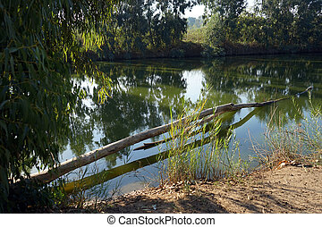 Tree and river - Eucaliptus and river in Nahal Alexander...