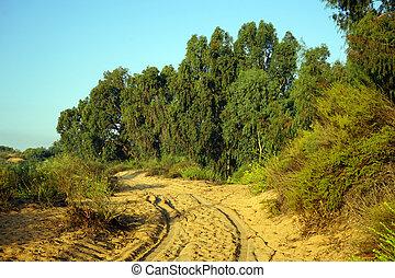 Tracks near eucaliptus grove in rural Israel...
