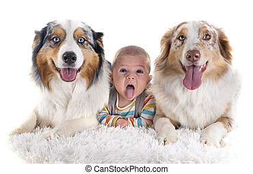 baby and dogs - three months baby and dogs in front of white...
