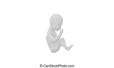 White baby fetus concept - 3D anatomy concept