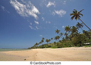 The Coral Coast, Fiji